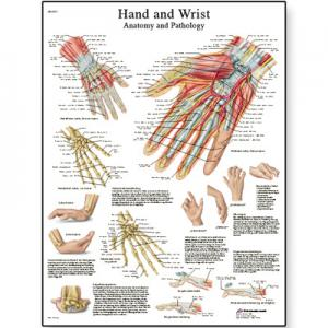 手与腕Hand and Wrist - Anatomy and Pathology(英文压膜高级版)